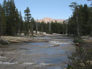Tuolumne River fishing in Yosemite